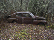 »VOLVO IN THE WOOD«